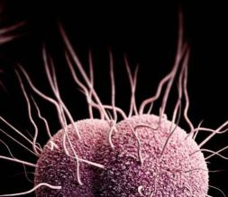 Tratamiento para la gonorrea